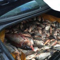 72 kg de peşte confiscate de poliţiştii de frontieră din cadrul Sectorului Poliţiei de Frontieră Oltenița
